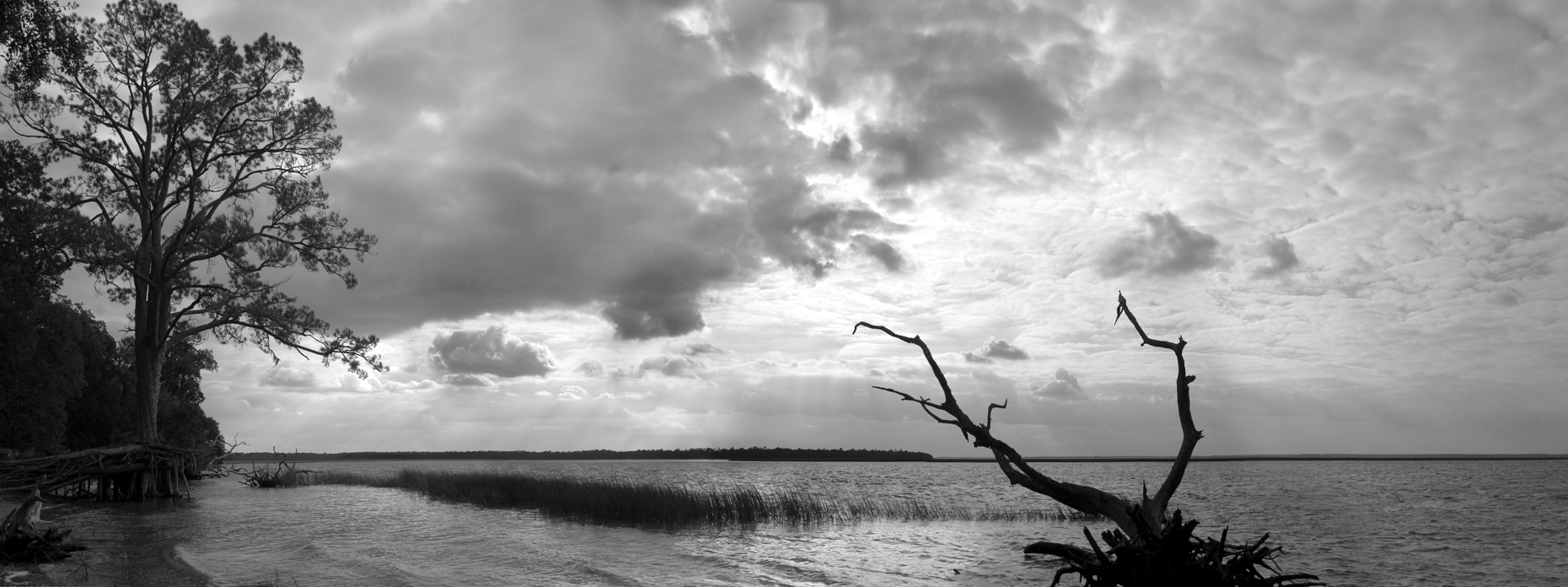 (BW)-Salt-Marsh-2.jpg